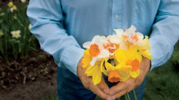 daffodils, flowers