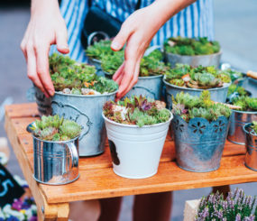 Succulent pots at flower market