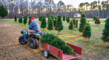 Lee County Tree Farm ©Journal Communications/Justin Kase Conder